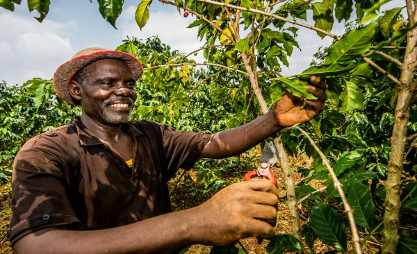 Coffee farmer Paul Baziki from the village of Bikinga, Rwanda