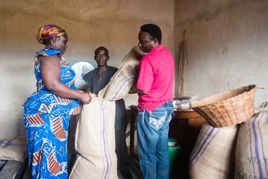 Farmers deliver dried cocoa beans to the FEDCO collection point in Kwabeng. On the right is FEDCO purchasing clerk Solomon Sanyomor