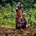 Farmers-philippines-microfinance-rural-potatoes.jpg