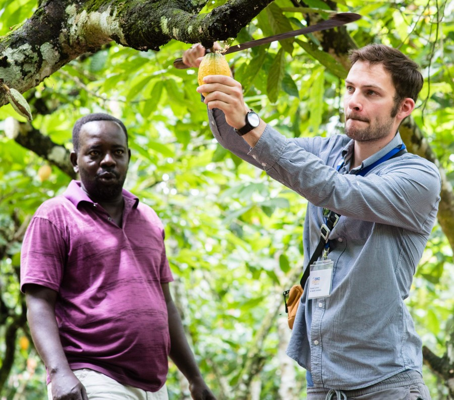Cocoa farmer Ofori Amanfo teaches one of the Oikocredit member representatives how to cut the cocoa pods from the tree trunk